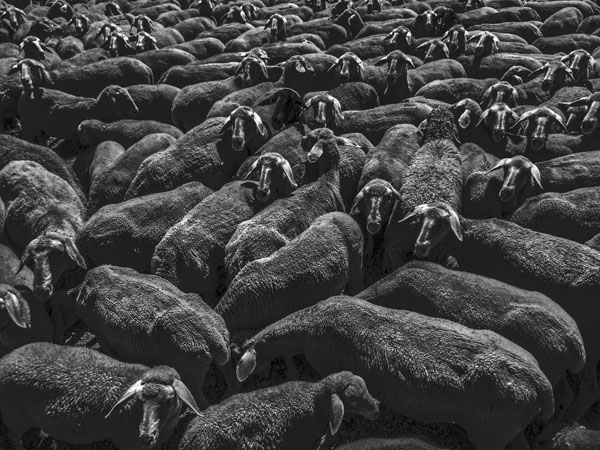 Sheep Everywhere nr. 1 by Jens Haas