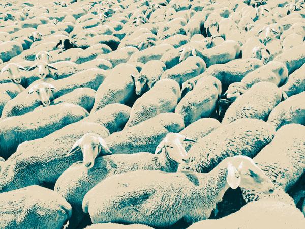Sheep Everywhere nr. 3 by Jens Haas