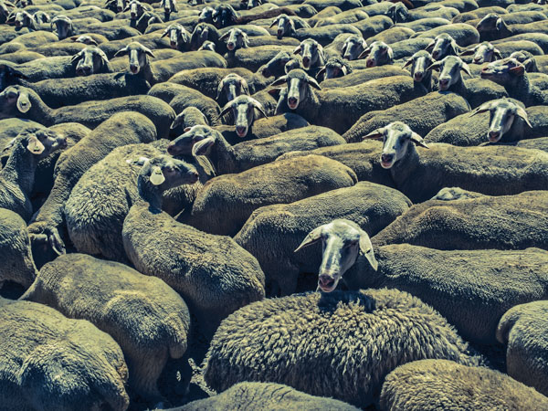 Sheep Everywhere nr. 4 by Jens Haas