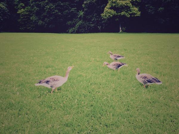 Grey Geese nr. 2 by Jens Haas