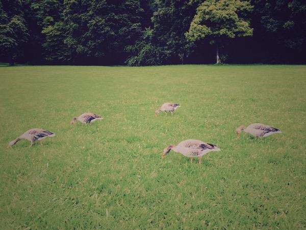 Grey Geese nr. 3 by Jens Haas