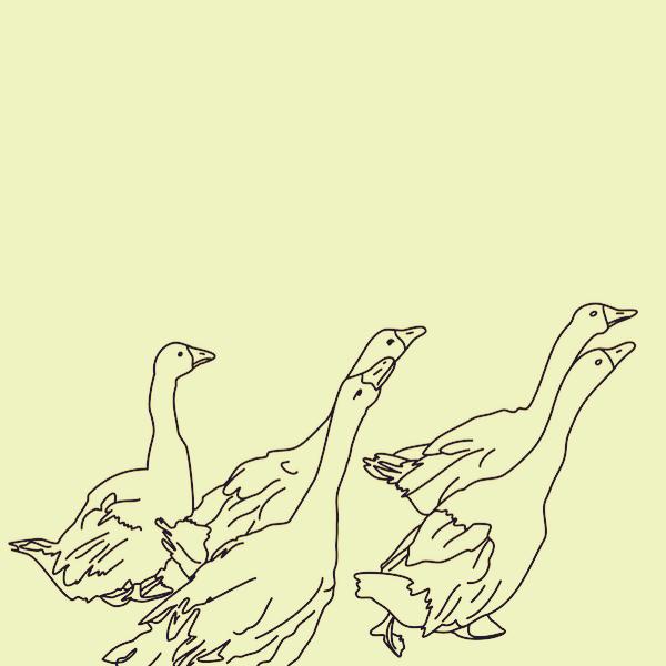 Geese by Jens Haas